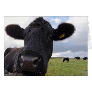 アイルランド牛! カード