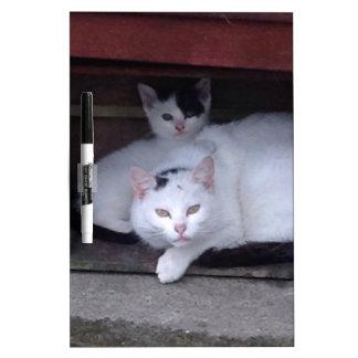 アイルランド猫はアイルランドの雨の日ShelterOnに取ります ホワイトボード