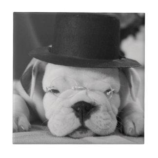 """""""アインシュタイン""""の英国のブルドッグの子犬 タイル"""