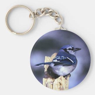 アオカケスの美しい鳥 キーホルダー