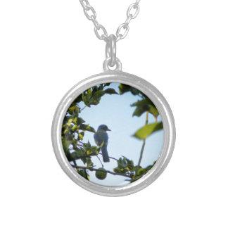 アオカケスの美しい鳥 シルバープレートネックレス