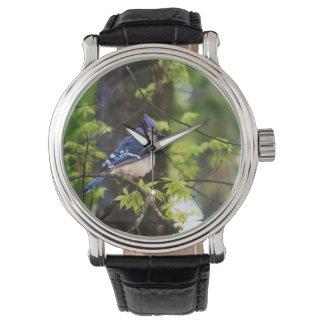 アオカケスの自然の腕時計 ウォッチ