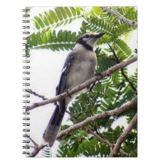 アオカケスの螺線形の写真のノート ノートブック