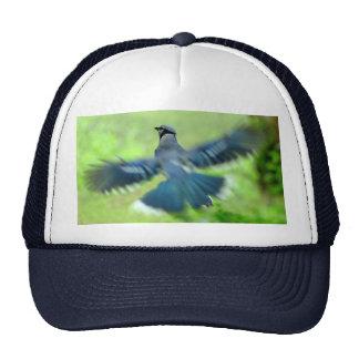 アオカケスの飛行中に帽子 トラッカーハット