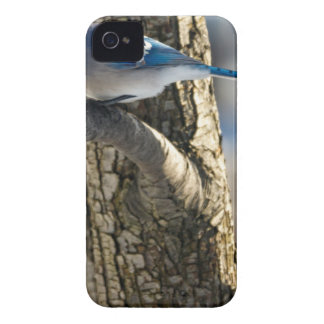 アオカケス Case-Mate iPhone 4 ケース