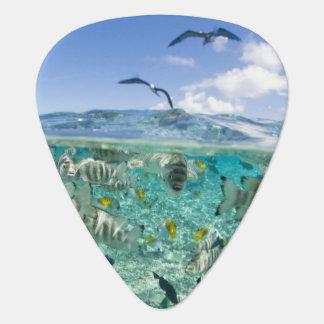 アカエイを特色にする礁湖のサファリ旅行 ギターピック