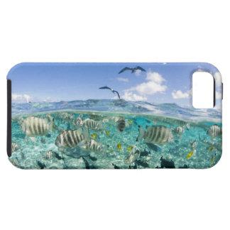 アカエイを特色にする礁湖のサファリ旅行 iPhone SE/5/5s ケース
