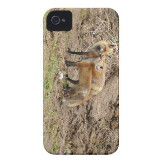 アカギツネの母及びキットの愛情のiphone 4ケース Case-Mate iPhone 4 ケース