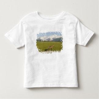 アカギツネ、Vulpesのfulva、丸太で、こんにちは氷河 トドラーTシャツ