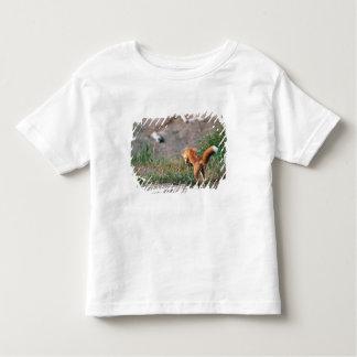 アカギツネ、Vulpesのvulpes、アラスカ半島、3 トドラーTシャツ