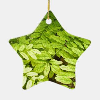 アカシアの明るく、緑、小さい、楕円形の葉 セラミックオーナメント
