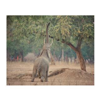 アカシアの木のために達している象 ウッドウォールアート