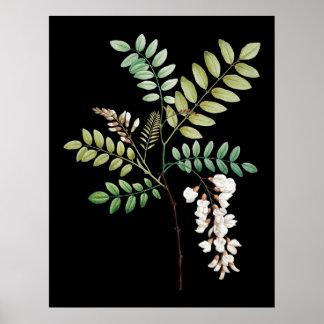 アカシア、黒い位置は、植物のプリントを囲みます ポスター