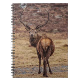 アカシカの雄鹿のノート ノートブック