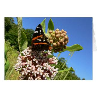 アカタテハチョウの蝶 カード