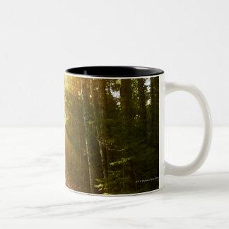 アカディア国立公園の森林を通した日曜日のビーム ツートーンマグカップ