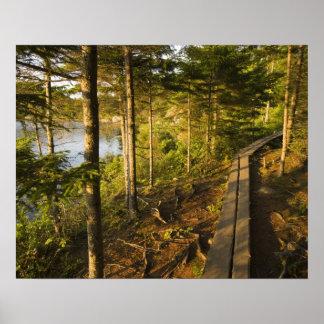アカディア国立公園メインの木の通路 ポスター
