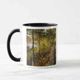 アカディア国立公園メインの木の通路 マグカップ