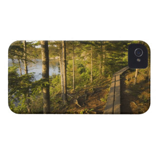 アカディア国立公園メインの木の通路 Case-Mate iPhone 4 ケース