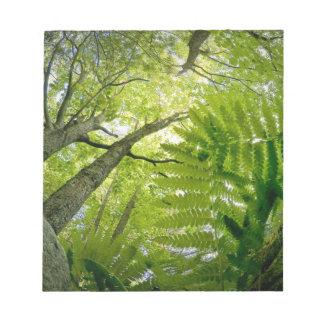 アカディア国立公園、メインの森林場面 ノートパッド