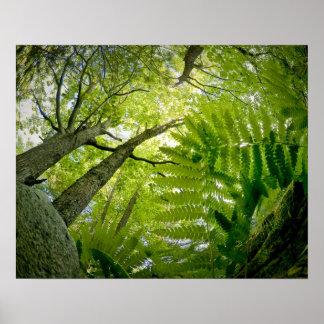 アカディア国立公園、メインの森林場面 ポスター