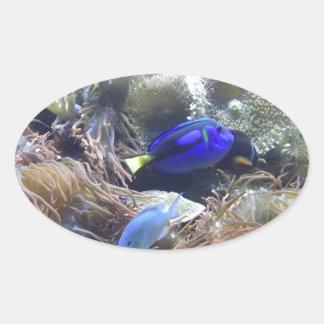 アクアリウムの魚の写真 楕円形シール
