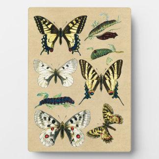 アゲハチョウの幼虫、蝶およびガ フォトプラーク