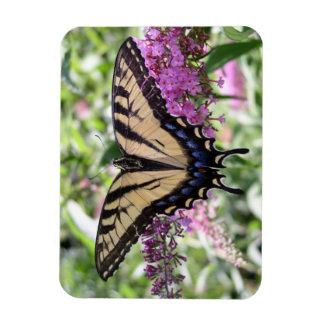アゲハチョウの蝶磁石 マグネット