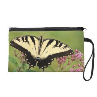 アゲハチョウの蝶