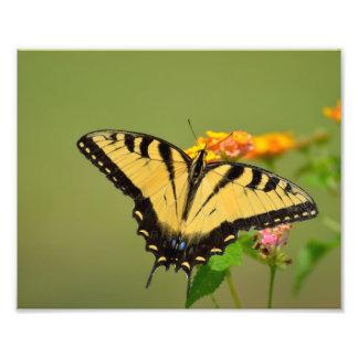 アゲハチョウの蝶 フォトプリント