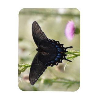 アゲハチョウの蝶 マグネット