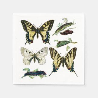 アゲハチョウの蝶、幼虫およびガ スタンダードカクテルナプキン