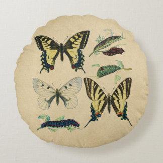アゲハチョウの蝶、幼虫およびガ ラウンドクッション