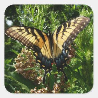 アゲハチョウの蝶III美しくカラフルな写真 スクエアシール