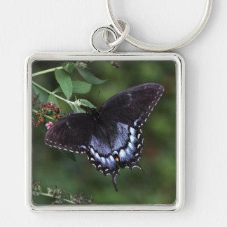 アゲハチョウの蝶Keychain シルバーカラー正方形キーホルダー