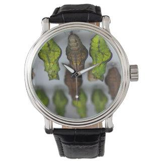 アゲハチョウChrysalises ウオッチ
