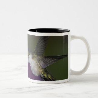 アザミのルビーthroatedハチドリ飛行中に ツートーンマグカップ