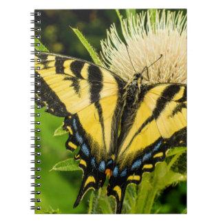 アザミの西部のトラのアゲハチョウ ノートブック