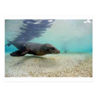 アシカの水中楽園の礁湖 ポストカード
