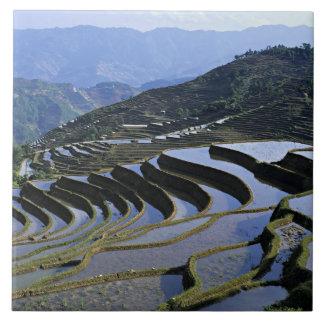 アジアの中国、ユンナン、Yuanyang。 険しい タイル