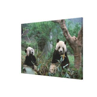 アジアの中国、成都。 ジャイアントパンダの聖域- キャンバスプリント