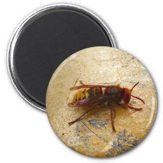 アジアスズメバチの磁石 マグネット