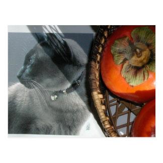 アジア猫 ポストカード