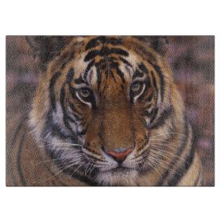 アジア、インドのBandhavgarthの国立公園、 カッティングボード