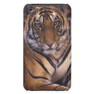 アジア、インドのBandhavgarthの国立公園、 Case-Mate iPod Touch ケース