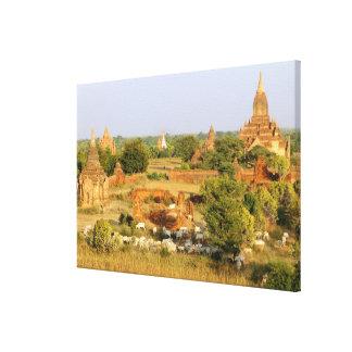 アジア、ミャンマー(ビルマ)、Bagan (異教徒)。 牛パス キャンバスプリント