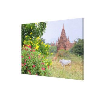 アジア、ミャンマー(ビルマ)、Bagan (異教徒)。 牛 キャンバスプリント