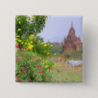 アジア、ミャンマー(ビルマ)、Bagan (異教徒)。 牛 5.1cm 正方形バッジ