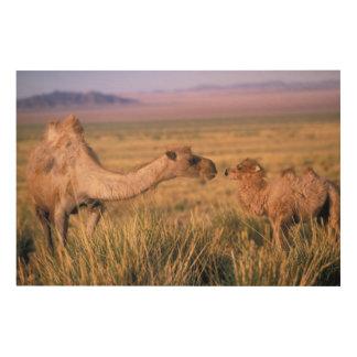 アジア、モンゴル、ゴビ砂漠、素晴らしいゴビ砂漠 ウッドウォールアート