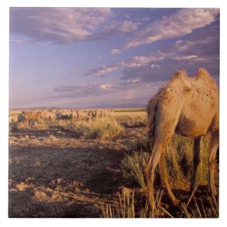 アジア、モンゴル、ゴビ砂漠、素晴らしいゴビ砂漠 タイル